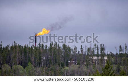 Flare stack with flames above treeline in oilfield #506103238