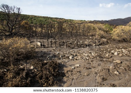 Flash flood mud from runoff after a forest fire Stock photo ©
