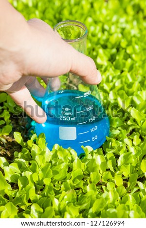 flask with blue solution in the lettuce seedling field