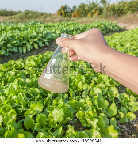 flask with soil solution in hand in the lettuce field