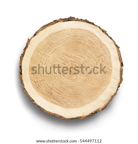 Flat cross section of tree stump slice with age rings and cracks. Shows wood grain and texture isolated on white background.