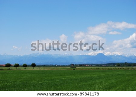 Flat farmland in summer, Alps mountains in background, Po valley, Piedmont, Italy