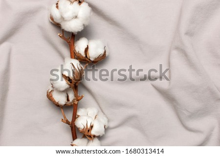 Flat lay Beautiful cotton branch on gray fabric top view copy space. Natural cotton fabric texture. Delicate white cotton flowers. Light color cotton background. Eco textiles