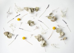 Flat lay composition of different dried flowers on a white background. Lifestyle botanical background from Craspedia, eucalyptus, lavender and gypsophila. Top view
