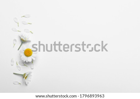 Flat lay composition with fresh chamomiles on white background. Space for text Foto stock ©