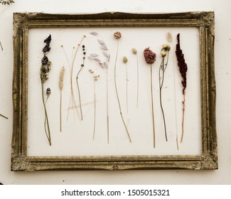 Stock photo Flat lay Natural dried single flowers stems arranged inside gold frame against off white background
