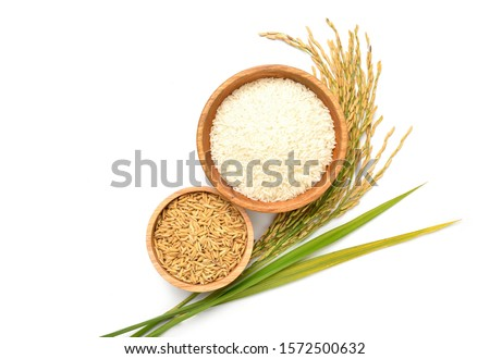 Flat lay (Top view) of white rice and paddy rice in wooden bowl with paddy rice ears and green blades isolated on white background.