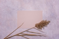 Flat lay with natural dried reed flowers and blank square peach colored textured paper sheet on textured dusk concrete background. Copy space. Mochup with organic floral design in pastel colors.