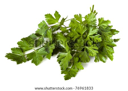 Flat-leaf parsley, isolated on white background.  Fresh-picked from my garden, with raindrops.