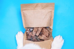 Flat top with adorable white paws of Welsh Corgi Pembroke standing on a craft pack with dog dry treats. Studio, copy space, bright blue background.