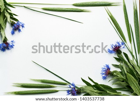Flatlay composition of field plants: cornflowers and rye ears, floral dedsign of natural frame, rustic style of decor, empty space in the center for your text, closeup, flat lay, top view #1403537738