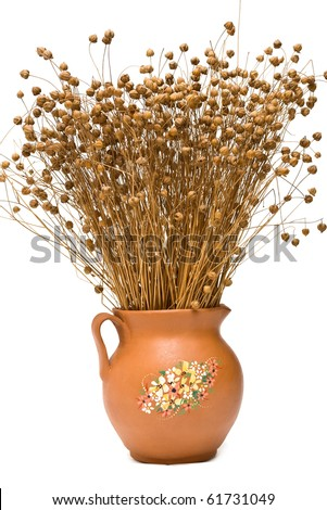 Flax (Linum usitatissimum) in the pottery jug on white background