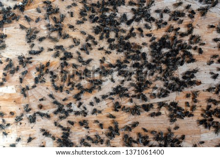 flies infestation in the house