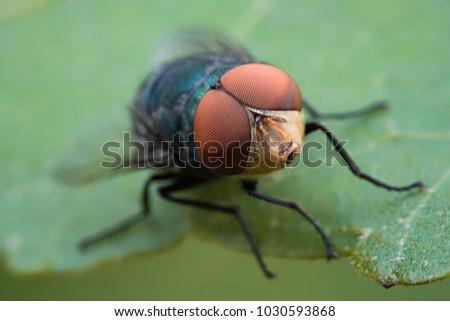 Flies macro shot of the countryside