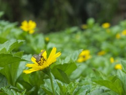 Flies perched on yellow flowers