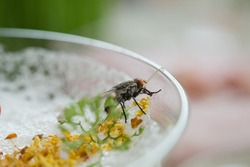 flies swarm on food, dirty food can not eat