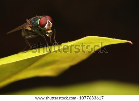 Flies with red eyes #1077633617
