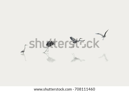 flight steps progress of a migratory bird