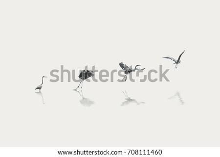 flight steps progress of a migratory bird