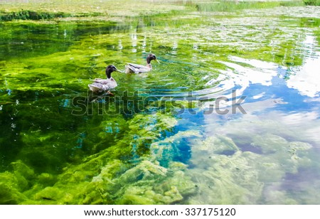 free stock photo of lake with ducks freerange stock