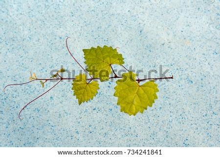 floating heart shaped leaf in a pool #734241841