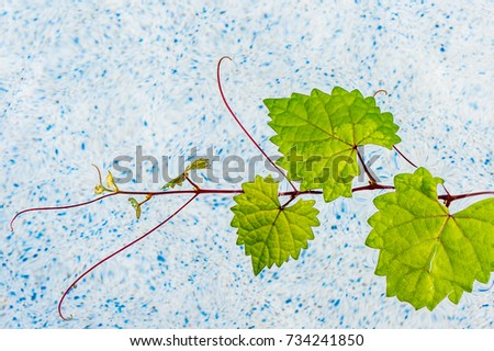 floating heart shaped leaf in a pool #734241850