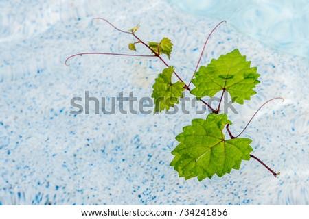 floating heart shaped leaf in a pool #734241856
