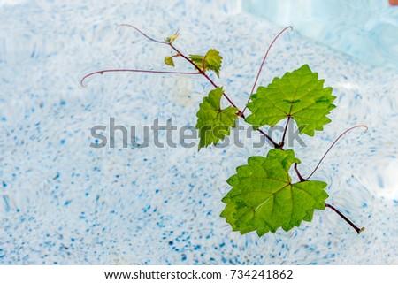 floating heart shaped leaf in a pool #734241862