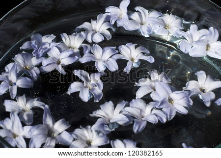 floating hyacinth flowers in aromatherapy bowl