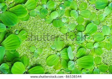 Floating plants in a water
