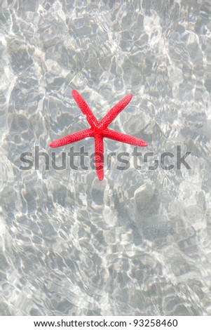 floating red starfish in white sand beach ripple water