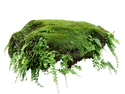 Floating rock island covered by green moss, grass and fern, isolated on white background.