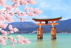 Floating Torii gate (O-Torii) and branch of the blossoming sakura with white flowers, Itsukushima Shrine, sacred Miyajima island, Hiroshima, Japan. UNESCO world heritage site