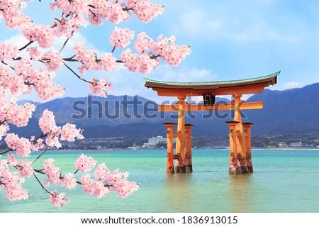 Floating Torii gate (O-Torii) and branch of the blossoming sakura with white flowers, Itsukushima Shrine, sacred Miyajima island, Hiroshima, Japan. UNESCO world heritage site Stockfoto ©