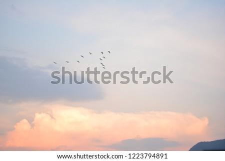 Flock of birds #1223794891