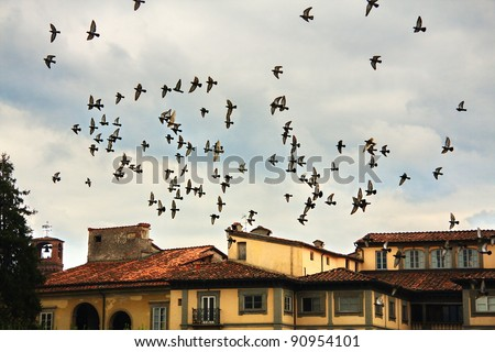 Flock of birds about Lucca