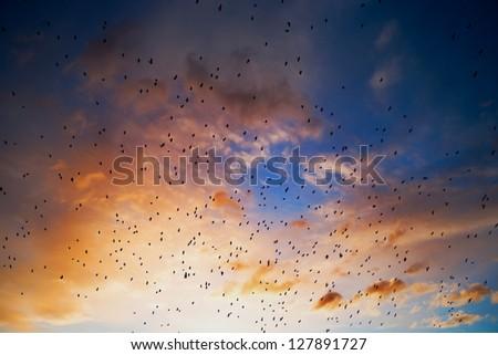 Flock of birds against sunset - stock photo
