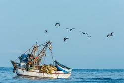 flock of birds and fishing boat in the peruvian coast at Piura Peru