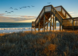 Flock of Birds at Topsail Beach in Jacksonville NC
