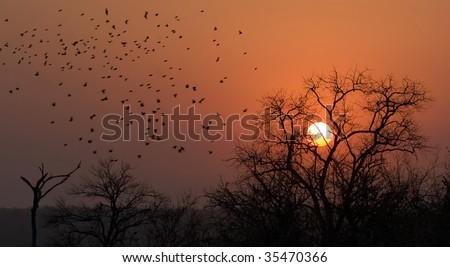 Flock of birds during sunset in Kruger Park