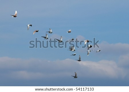 Flock of birds flyin in the sky - stock photo