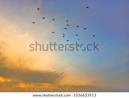 Flock of birds flying in the sky at sunrise #1036623913