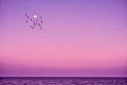 flock of birds flying near moon above ocean surface in Sun Island – Maldives