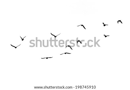 flock of birds on a white background - Shutterstock ID 198745910