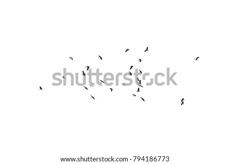 Flock of birds on a white background. For design.\rFlock of birds isolated on a white background.