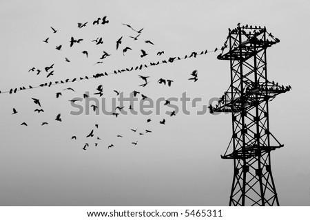 Flock of birds on power lines. Flying. #5465311