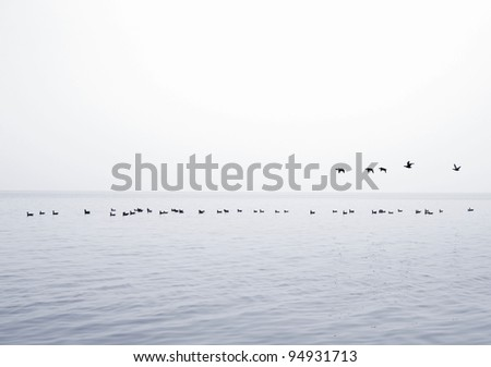 Flock of birds over the sea