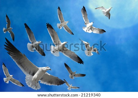 Flock of birds (seagulls) following the light in the sky