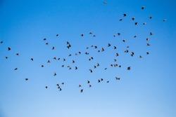 Flock of birds seen flying in the sky
