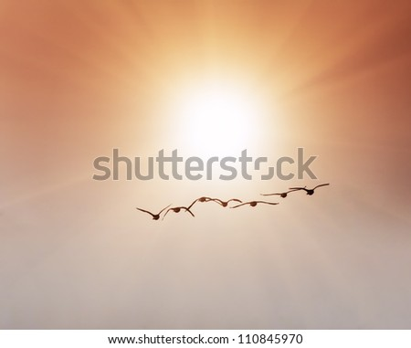 Flock of birds traveling south towards sun